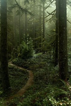 Misty forest at Silverton falls area, Oregon! Misty forest at Silverton falls area, Oregon! Forest Path, Misty Forest, Forest Trail, The Forest, Conifer Forest, Forest Fairy, Theme Nature, Forest Photography, Camping Photography