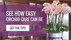 Orchid Care 101 - why are my leaves turning yellow #orchid