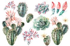 Watercolor SUCCULENTS & CACTUSES by knopazyzy on @creativemarket