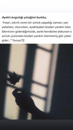 English Quotes, Happy Campers, Quran, Allah, Lyrics, Motivation, Photography, Instagram, Life