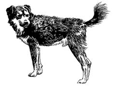 Shakhi Dog - also known as the Tibetan Guard Dog, the Congkhi or the Kongpo, this breed was developed as a sentinel and a guardian of Tibetan camps.