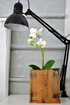 orkidé trälåda pannplåt