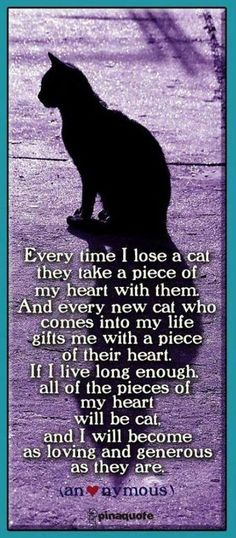 the love of cats !