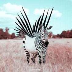 À 20 ans, Julien Tabet métamorphose les animaux avec des montages ultra-créatifs