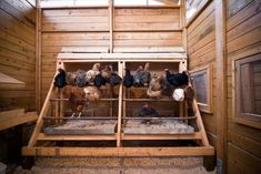 "Poop trays make for easy cleanup. ""This is the way my husband built our hen coop. It is the greatest. I just pull them out and sweep the chicken poop into a big tub and it is ready to be added to composting. Absolutely love it! Clean-up is a breeze. Chicken Coup, Best Chicken Coop, Backyard Chicken Coops, Chicken Coop Plans, Building A Chicken Coop, Chickens Backyard, Inside Chicken Coop, Backyard Coop, Chicken Coop Decor"