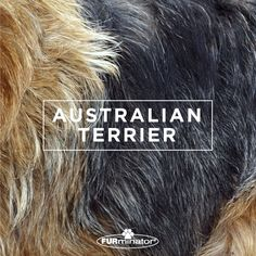 #Dog-Inspired #Design: We think the best, most #beautiful #coats belong to our four-legged family members. #AustralianTerrier