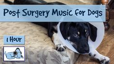 After Surgery Music for Dogs, Soothing Music for Dogs Post Operation, Af...
