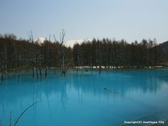 Blue pond in Biei | Furano | Japan Travel Guide - Japan Hoppers