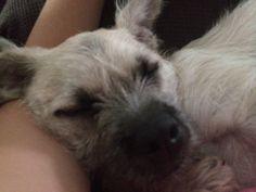 My dog Nero
