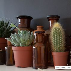 This weekend we got our first apartment plants: a cactus, which is having a tough time getting used to his new home (he jumped off the shelf...twice), and 2 succulent plants. Perfect for our curren...
