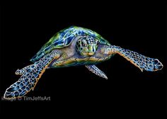 Here's my finished Color Pencil Sea Turtle Drawing. Prints of my work are available at https://www.etsy.com/shop/TimJeffsArt