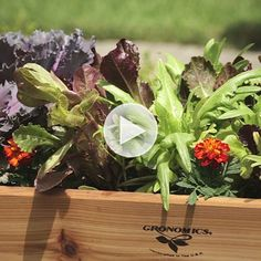 We've got all the secrets! Watch how to grow a container vegetable garden here: http://www.bhg.com/videos/m/85233812/the-secret-to-growing-a-container-vegetable-garden.htm?socsrc=bhgpin082014containervegetablegarden