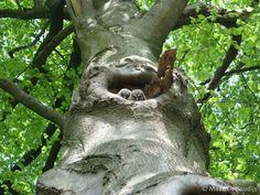 Jonge uiltjes  Foto: Natuurmonumenten Nederland