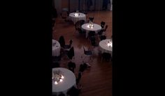 Watch this kid hilariously dance by himself at a wedding
