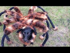 funny spider dog in a city