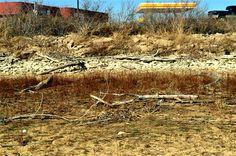 more driftwood/rocks