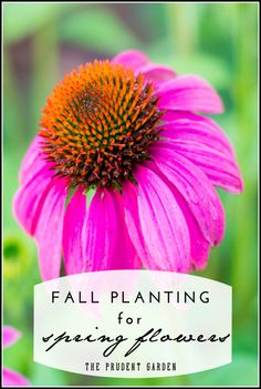 Fall planting is the best way to establish many of the flowering plants in the landscape. Annuals, perennials, trees and shrubs are all candidates.