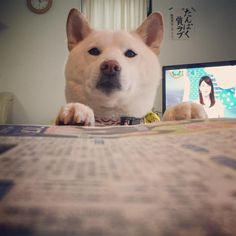 @uminoriharuのInstagram写真をチェック • いいね!5,824件