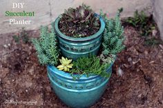 How to Make a Succulent Planter
