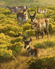 Dustin Van Wechel: Seasons of the West - Exhibitions - Trailside Galleries Large Painting, Artist Painting, Animals With Antlers, Paintings I Love, Wildlife Art, Western Art, American Artists, Pet Birds, Cute Animals