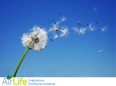 #airlife #aire #previsión #virus #hongos #bacterias #esporas #purificación  purificación de aire Airlife te dice. Junto con el agua el aire es una de las substancias mas importantes para lograr vivir  para los humanos. Necesitamos oxigeno. Y necesitamos que este limpio el aire que nos rodea para evitarnos problemas serios de salud. http://airlifeservice.com/