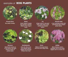 bog-plants