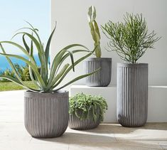 Browse Pottery Barn's patio and outdoor planters for a variety of stylish choices. Options include round and square floor planters made from metal, concrete and wood. Indoor Planters, Concrete Planters, Planter Pots, Indoor Garden, Faux Plants, Potted Plants, Patio Plans, Pot Jardin, Snake Plant
