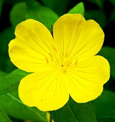 Wild Flower by g. healey on 500px