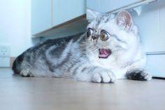 Herman est la nouvelle star du web. Après Grumpy Cat, il prend la relève du chat bizarre et mignon à la fois. Sa propriétaire se confie.