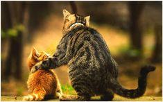 Mom Cat And Baby Cat Cute Wallpaper | mom cat and baby cat cute wallpaper 1080p, mom cat and baby cat cute wallpaper desktop, mom cat and baby cat cute wallpaper hd, mom cat and baby cat cute wallpaper iphone