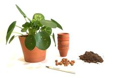 plante - Page 1 - Sweety Oxalis Belle Plante, Garden Deco, Plantation, Decoration, Succulents, Planter Pots, Flowers, Diy, Green