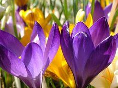 Simple Spring Renewal Ostara Ritual for Solitaries and Groups