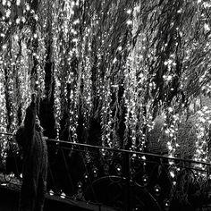 Thousands of lights 👆🏻