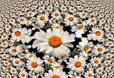 White Daisy Fractal by Christina Dare | GuruShots