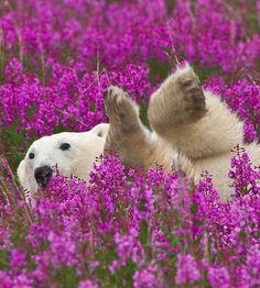 se rouler dans les fleurs quel bonheur !