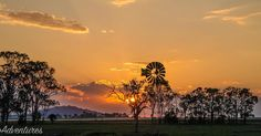 Silhouettes at sunset #qld #visitqld #nobby #sunset #skyporn #golden #rural #rural_love #ruralqld @foto_adventures  #sunsetseries