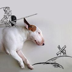 When Brazilian artist Rafael Mantesso's wife left him, he found himself in an empty house with few belongings and a broken heart. His bull terrier Jimmy Choo helped him by posing. Perros Bull Terrier, Chien Bull Terrier, British Bull Terrier, English Bull Terriers, Bull Terriers Anglais, I Love Dogs, Cute Dogs, Funny Dogs, Funny Animals