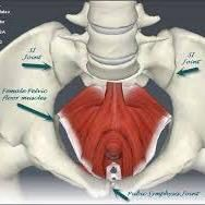 A Very Brief Description Of Pelvic Floor Dysfunction From Sallie Sarrel,  Doctorate Of Physical Therapy And Womenu0027s Health Specialist