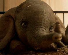 Resultado de imagem para Filme 'Dumbo' de Tim Burton ganha trailer e emociona internautas Tim Burton, Disney Live, Disney Art, Dumbo Live Action, Action Wallpaper, Dumbo Movie, Disney Pixar Movies, Movie Wallpapers, Trailer
