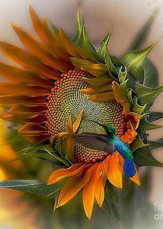 Solve Le colibri et le tournesol jigsaw puzzle online with 70 pieces Pretty Birds, Love Birds, Beautiful Birds, Beautiful World, Animals Beautiful, Beautiful Pictures, Pretty Flowers, Beautiful Gorgeous, Simply Beautiful