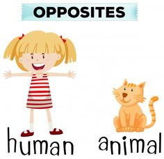 Opposite words for boy and girl Free Vector Vector English Phonics, English Grammar Worksheets, English Vocabulary, Teaching English, Preschool Learning Activities, Speech Therapy Activities, Infant Activities, English Lessons For Kids, Learn English Words