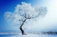 Une histoire d'hiver...