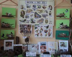 Hnízdění v ptačí říši (duben 2018) Bulletin Boards, Photo Wall, Gallery Wall, Spring, Frame, Home Decor, Picture Frame, Photograph, Decoration Home