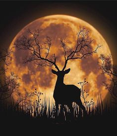 The Guru Within — New moon yuma_hidaka
