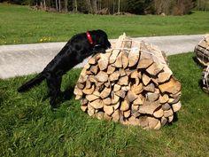"""""""Working dog"""" - Ganz schön schwer das Ding :)"""