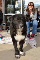 Flynn is an adoptable Border Collie Dog in Alpharetta, GEORGIA. Thank you for checking out my bio, please check back for an update. My foster is getting me safe & warm. Information will be updated as soon...