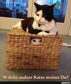 Welche andere Katze meinst Du? | Lustige Bilder, Sprüche, Witze, echt lustig
