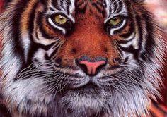 Tijger  http://www.wtf.nl/grenzeloos/4117/dit-is-geen-foto-fotoserie.html#