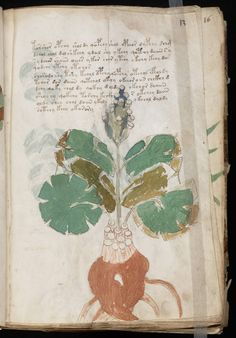 manuscrito025.jpg (1071×1536)