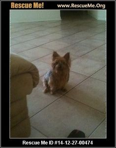 escue Me ID: 14-12-27-00474Hailey (female)  Yorkie  Age: Senior  Compatibility:Good with Most Dogs, Good with Adults (Not Kids) Personality:Average Energy, Very Submissive Health:Needs to be Spayed  Looking for an older couple who will love Hailey, spend a lot of time with her everyday, and preferably someone who travels so that Hailey can travel in her older age. I work all day, 6 days a week until late at night. Hailey has grown very tired of me not being around with her as…